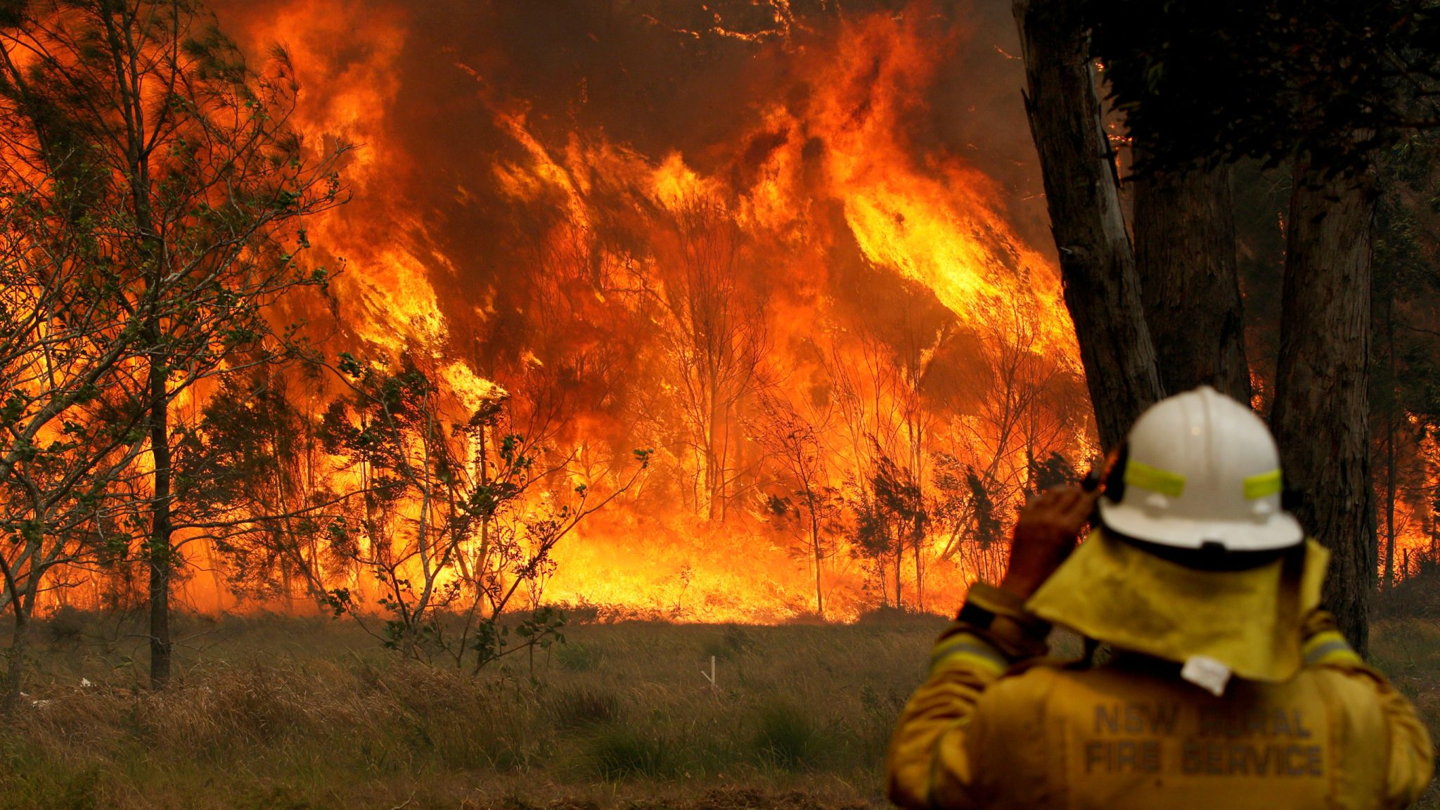 Ways you can help during Australia's wildfires
