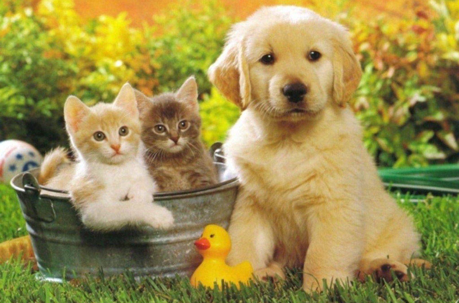 kittens puppies